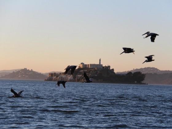 Pelikane vor Alcatraz