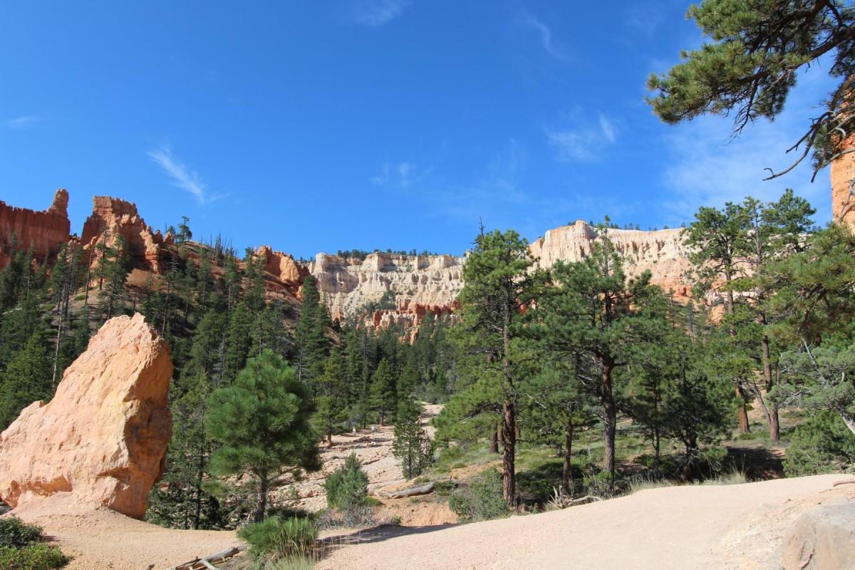 Grün im Bryce Canyon